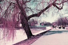 0927_new_purple_charlotte_olympusom-2_iso200_5_